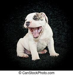 perrito, reír