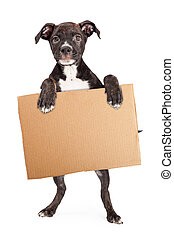 perrito, tenencia, blanco, cartón, señal