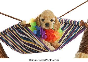 perrito, vacaciones