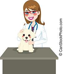perrito, veterinario, visitar