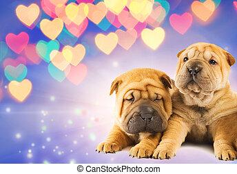 perritos, amor, dos, shar-pei