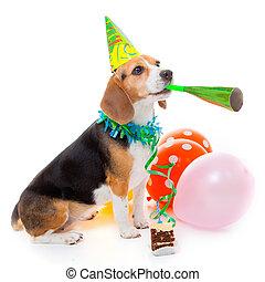 perro, animal de la fiesta