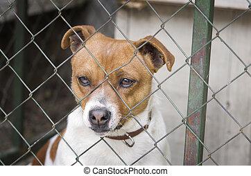 perro, atrás, acoplamiento de alambre