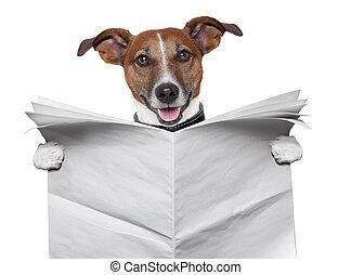 perro, blanco, periódico