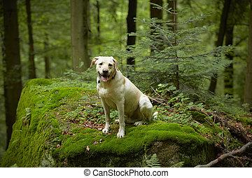 perro, bosque
