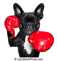 perro, boxeo