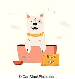 perro, caja, cartón, sin hogar, sentado