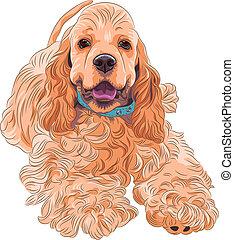 perro, casta, norteamericano, spaniel, deportivo, lindo, ...