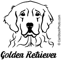perro cobrador dorado, cabeza