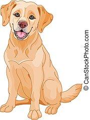 perro cobrador dorado