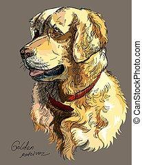 perro cobrador dorado, vector, colorido