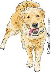 perro cobrador, feliz, labrador, casta, vector, sonriente, bosquejo, perro