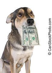 perro, con, dinero