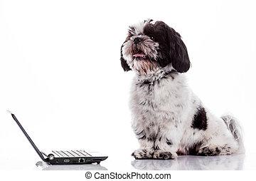 perro, con, laptop.