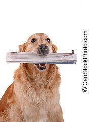 perro, con, periódico