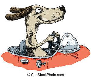 perro, conducción