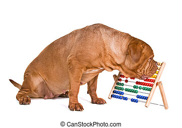 perro, contabilidad