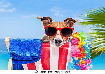 perro, día de fiesta de verano, vacaciones