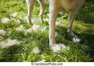 perro, el suyo, piel, cepillado
