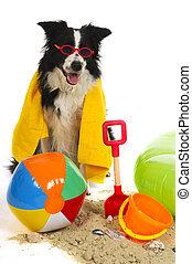 perro, el vacaciones
