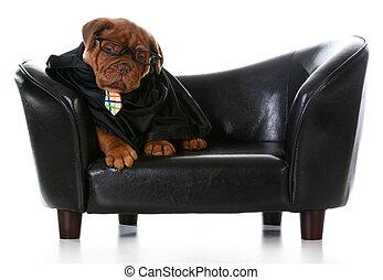 perro, empresa / negocio