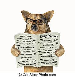 perro, en, anteojos, lee, un, periódico