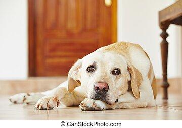 perro, en casa