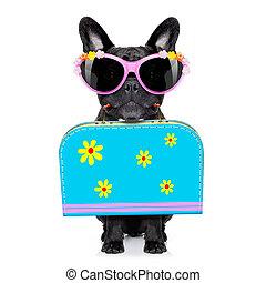 perro, en, día de fiesta de verano, vacaciones