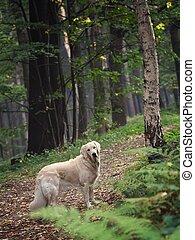 perro, en, el, bosque