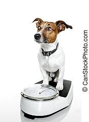perro, en, escala