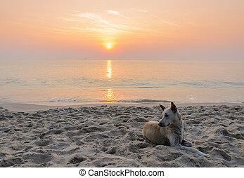 perro, en la playa, en, salida del sol
