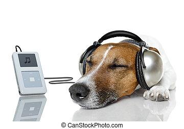 perro, escuche música, con, un, jugador de la música