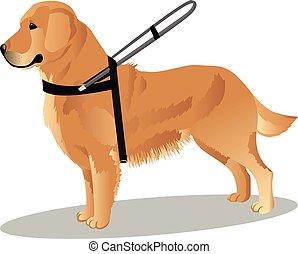 perro guía, perro cobrador