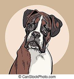 perro, illustration., boxer.