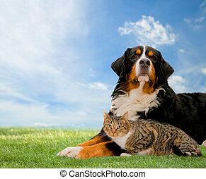 perro, juntos, gato
