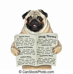 perro, lee, un, periódico, 2