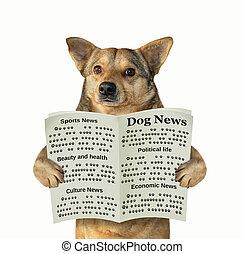 perro, lee, un, periódico
