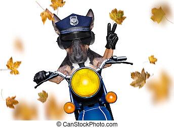perro, otoño, policía, otoño, o, motocicleta