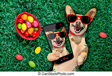 perro, pascua, feliz, huevos
