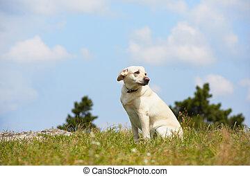perro, perdido