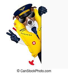 perro, piloto
