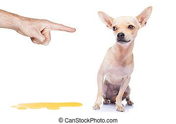 perro, pis