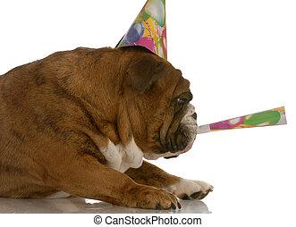 perro presa inglés, sombrero del partido, soplar, en, cuerno