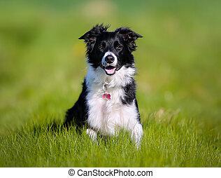 perro purebred