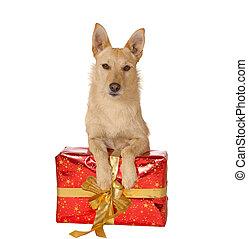 perro, regalo, navidad