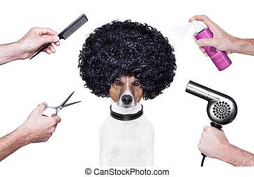 perro, rociar, tijeras, peluquero, peine