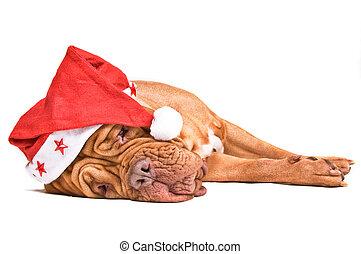 perro, santa, cansado