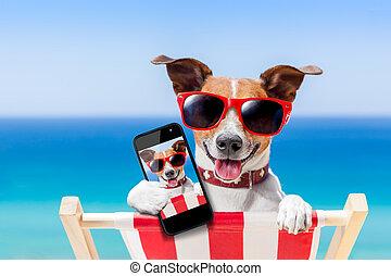 perro, selfie, verano