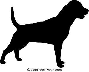perro, silueta, rottweiler