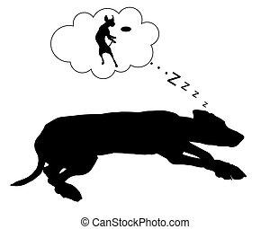 perro, sueños